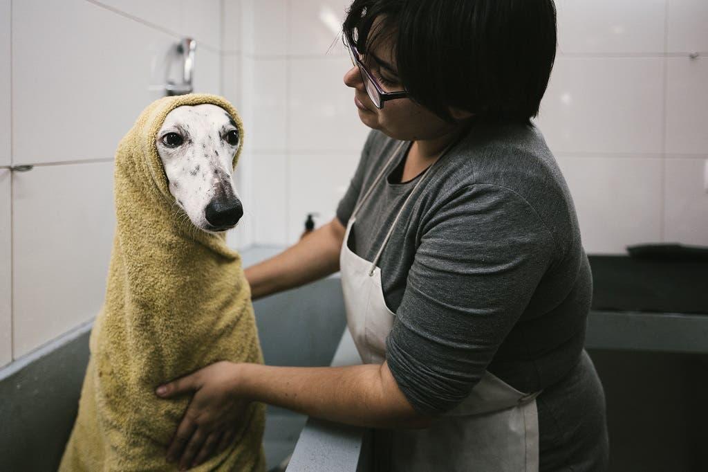 La Leica Q también nos va a permitir capturar momentos familiares, como por ejemplo lo gracioso que está mi perro al llevarlo a lavar.