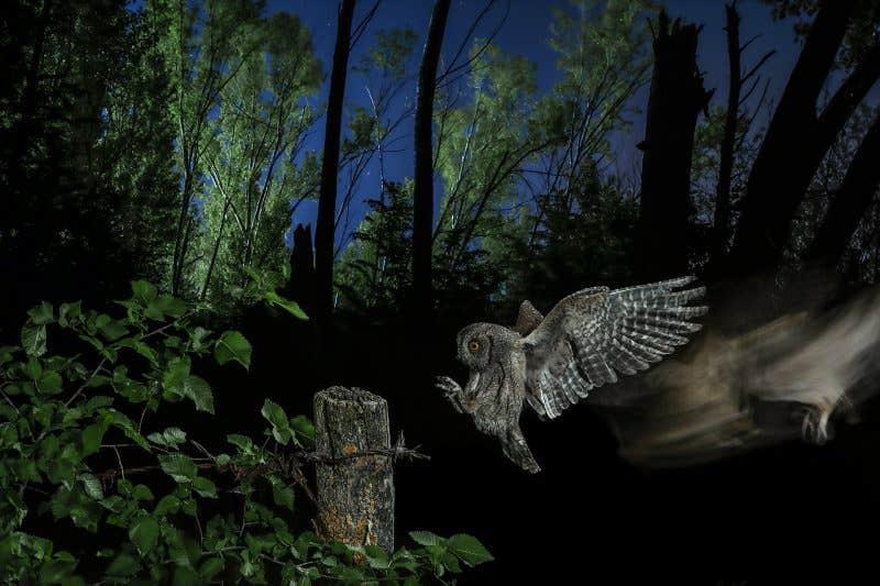 Tercer premio Entorno - El duende del bosque - Mario Cea