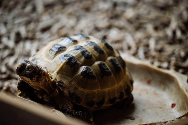 Prueba de enfoque a mínima distancia con mi tortuga Hodor (400mm – 1/60 – f6.3 – ISO800)