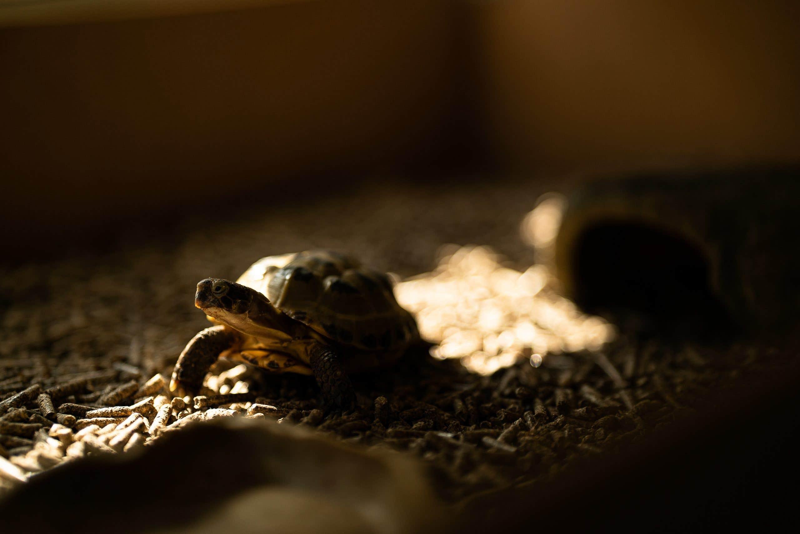 Prueba de la distancia mínima de enfoque - Hodor, mi tortuga, buscando el sol