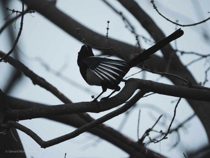 Pájaro posado sobre una rama